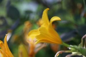 Kaleido Lily 2